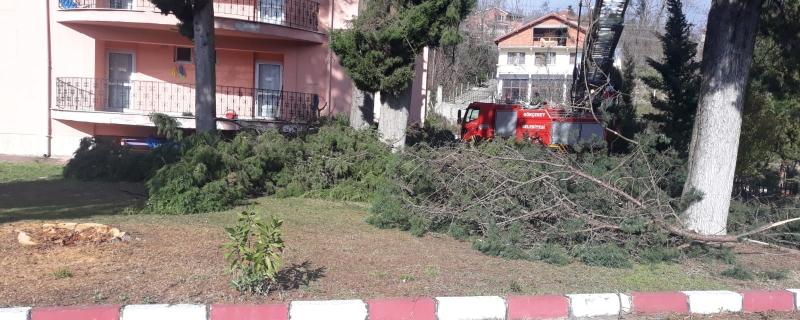 Belediyemiz ekipleri ağaç budama çalışması yaptı